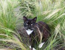 Gato negro hermoso en el jardín, Lituania Imagen de archivo libre de regalías