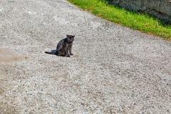 Gato negro hermoso en la calle Imagen de archivo