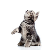 Gato negro joven juguetón que mira para arriba Foto de archivo