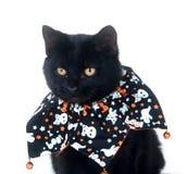 Gato negro lindo en el babero de Víspera de Todos los Santos foto de archivo libre de regalías