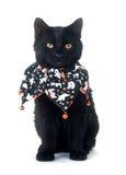 Gato negro lindo en el babero de Víspera de Todos los Santos Fotos de archivo libres de regalías