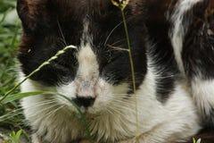 Gato negro lindo que miente en el césped de la hierba verde, profundidad baja del retrato del campo fotografía de archivo libre de regalías