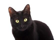 Gato negro lindo que mira para arriba, en el fondo blanco Foto de archivo