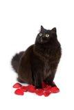Gato negro lindo que se sienta en los pétalos color de rosa aislados fotografía de archivo