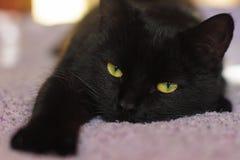 Gato negro perezoso con los ojos verdes liying en la cama imagen de archivo libre de regalías