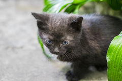 Gato negro que camina abajo de la calle Fotos de archivo