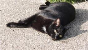 Gato negro que goza del sol caliente del verano en jardín concreto de la trayectoria almacen de metraje de vídeo