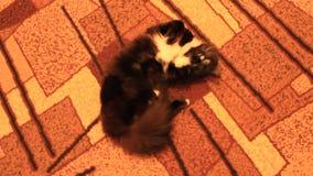 Gato negro que holgazanea alrededor en la alfombra