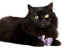 Gato negro que juega con el juguete Imagen de archivo