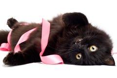 Gato negro que juega con la cinta rosada Foto de archivo