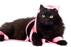 Gato negro que juega con la cinta rosada aislada Imágenes de archivo libres de regalías