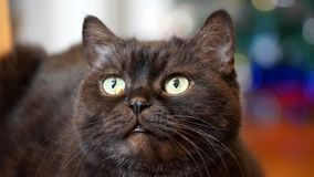 Gato negro que le mira Imagen de archivo libre de regalías