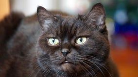 Gato negro que le mira imágenes de archivo libres de regalías