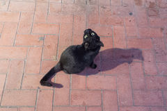 Gato negro que le mira en la calle Fotografía de archivo libre de regalías