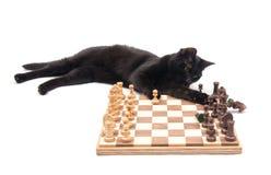 Gato negro que miente al lado de un tablero de ajedrez Fotos de archivo libres de regalías