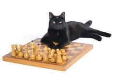 Gato negro que miente en el tablero de ajedrez con las figuras Foto de archivo