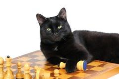 Gato negro que miente en el tablero de ajedrez con las figuras aisladas en blanco Fotografía de archivo