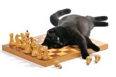 Gato negro que miente en el tablero de ajedrez que juega con las figuras Imágenes de archivo libres de regalías