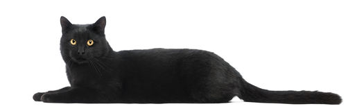 Gato negro que miente y que mira la cámara fotos de archivo