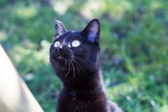 Gato negro que mira algo Imagen de archivo libre de regalías