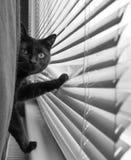 Gato negro que mira hacia fuera la ventana Imágenes de archivo libres de regalías