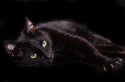 Gato negro que muestra garras en fondo negro Imagen de archivo libre de regalías