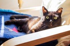 Gato negro que pone en una butaca Imagen de archivo