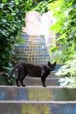 Gato negro que se coloca en las escaleras Imágenes de archivo libres de regalías