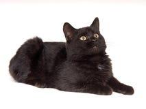 Gato negro que se reclina y que mira para arriba imagen de archivo