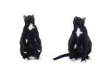 Gato negro que se sienta aislado sobre el fondo blanco Imagenes de archivo