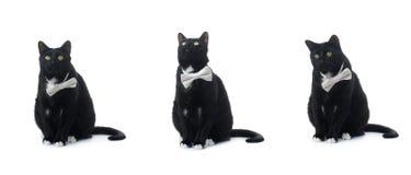 Gato negro que se sienta aislado sobre el fondo blanco Foto de archivo libre de regalías