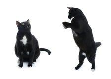 Gato negro que se sienta aislado sobre el fondo blanco Foto de archivo