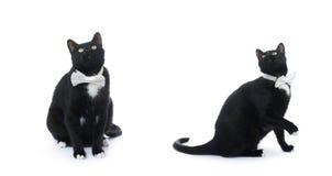 Gato negro que se sienta aislado sobre el fondo blanco Imagen de archivo libre de regalías