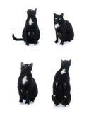Gato negro que se sienta aislado sobre el fondo blanco Fotografía de archivo