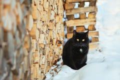 Gato negro que se sienta cerca de la madera en la nieve Imagen de archivo
