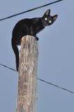 Gato negro que se sienta en el poste Foto de archivo libre de regalías