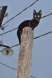 Gato negro que se sienta en el poste Fotos de archivo libres de regalías