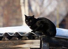 Gato negro que se sienta en el tejado de la vertiente Imágenes de archivo libres de regalías