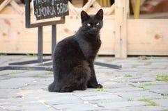 Gato negro que se sienta en la calle Fotos de archivo