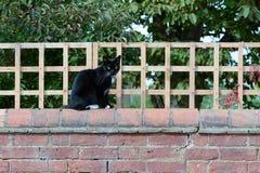 Gato negro que se sienta en la pared Foto de archivo
