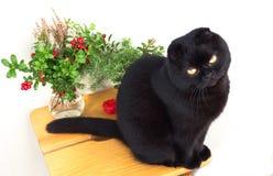 Gato negro que se sienta en un taburete en un fondo blanco Imagen de archivo libre de regalías