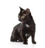 Gato negro que se sienta y que mira lejos Aislado en el fondo blanco Imágenes de archivo libres de regalías