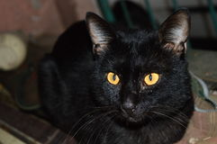 Gato negro Stock Photos