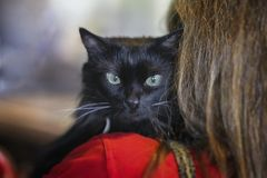 Gato negro sin hogar asustado en el hombro del voluntario de la muchacha en el refugio para los animales sin hogar La muchacha ll Imágenes de archivo libres de regalías