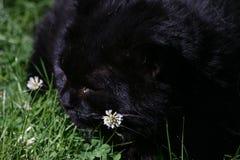 Gato negro soñoliento imagen de archivo
