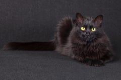 Gato negro soñoliento que miente abajo haciendo frente a la cámara en un fondo oscuro Fotografía de archivo libre de regalías