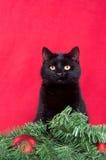 Gato negro y decoraciones de la Navidad Fotos de archivo libres de regalías