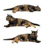 Gato negro y el dormir amarillo del modelo aislados en el fondo blanco fotos de archivo