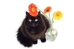 Gato negro y margaritas Fotos de archivo