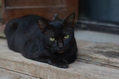 Gato negro y sueño amarillo de los ojos Foto de archivo libre de regalías